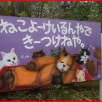 福井の猫寺、御誕生寺でモフモフまみれ~♪