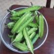 昨日は収穫量数を出しましたが