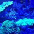 涼しげなサンゴ礁・・名古屋港水族館