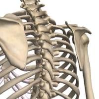 腰痛の原因が肩甲骨にあった!   金沢市    整体   ストレッチ   筋膜リリース