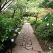 川崎のあじさい寺