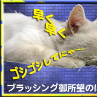 ナスのプルコギ弁当/ぽつ男の匍匐(ほふく)前進