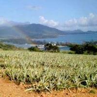 虹とパインと空と畑