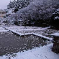 中山の蓮池に雪が降り積もる