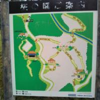 名護城公園へ桜見に行ってきました♪