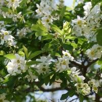 """""""京都府立植物園""""を訪ねる!・・Part3(完)・・"""