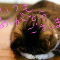 ◆5月4日と6日は休みます◆