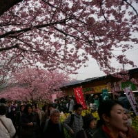 2月16日(土)‥‥イチゴ狩りと川津桜