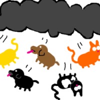 It's raining cats and dogs!!
