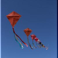 紺碧の空に連なる連凧