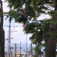 木登り~ツリーイング