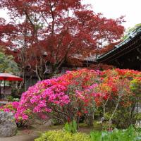 曇りを愉しむ 海蔵寺 色鮮やかな谷戸