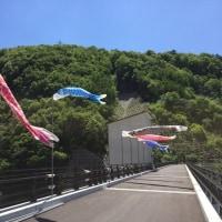 鯉のぼりが泳いでいます、浅川ダム