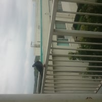 窓の外に鳩が一羽!!!