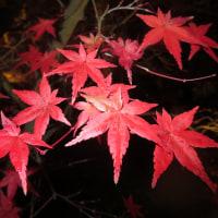 錦繍の京都紅葉めぐり 一日目