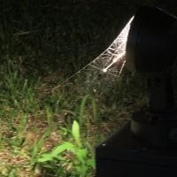 夕暮れの驚き!小さな蜘蛛の巣の輝き!誘蛾灯に照らされた光と影!