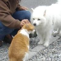 猫と犬の間柄