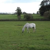 くもり空・・白い馬