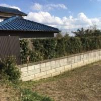 春の暖かさを感じて 残り20mの生垣剪定作業 茨城 河内