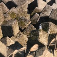 場所を変えたヤマセミがのんびりしていました。(Photo No.13997)