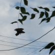 トルコ桔梗の開花とラブラブの蝶々
