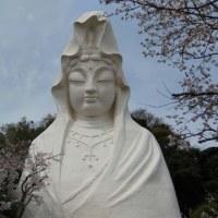 桜と観音様
