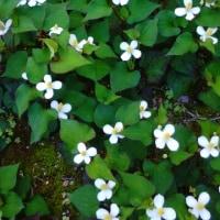5月27日の花
