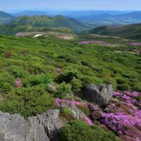 くじゅう、ミヤマキリシマに再びp3、扇ケ鼻山頂から(D810、18-35mm)