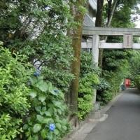 江古田駅界隈の散策 その2 (東京都練馬区) 緑も多い町