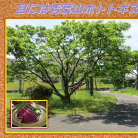 風薫る季節 「目には青葉山ホトトギス初鰹」