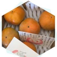 大秋柿を頂きましたヾ(๑╹◡╹)ノ