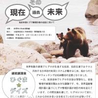 知床博物館 クマの特別展