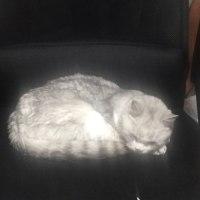 猫が亡くなりました