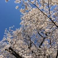 春♪ さっくんおめでとう!