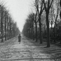 『晩春』と『第三の男』日英モノクロ名作を連続鑑賞