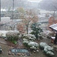 雪が降りましたね!