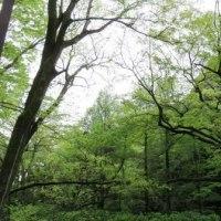 Gifu/ Gifu Park ( 岐阜公園)