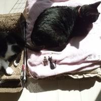 日なたぼっこ猫兄妹