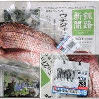 鯛のお刺身が、一人前(*´▽`*)100円で~