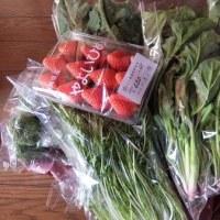 今朝の野菜