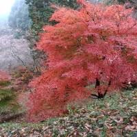 深まる秋の中で