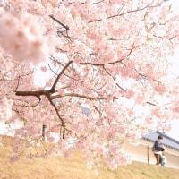 桜色の想い出。