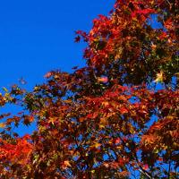 秋を見つけました^^v