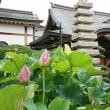 八国山緑地 (東京都・東村山市)