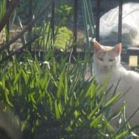 窓辺のぬくぬく猫