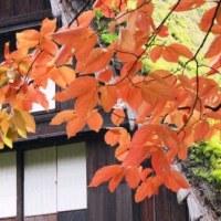 Gifu/ Takayama Trip ( 2 )