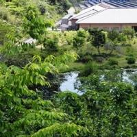 青い睡蓮の咲く村~三原村
