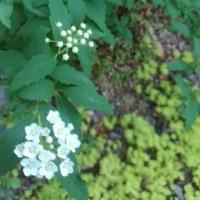 つぼみ次々 庭の春