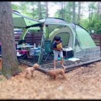⭐️  キャンプ   ⭐️