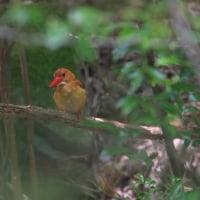 赤い鳥 2